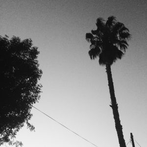Black-and-white June in Los Angeles.