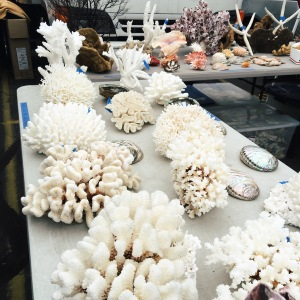 Last photo, I promise -- look at how cool this coral is.